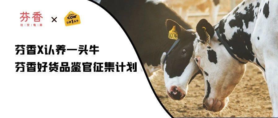 芬香电商联合认养一头牛,招募好货品鉴官!